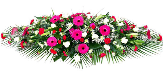 Coffin Spray Cerise Gerbera.